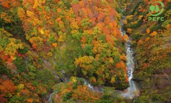 """Premi """"Comunità Forestali Sostenibili"""": vincitori e menzioni"""