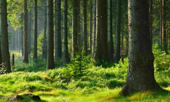 Allarme fragilità per le foreste del Mediterraneo