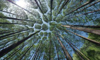 Protezione Europea delle foreste